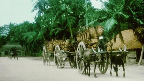 Villenour. (French India: Territory of Pondicherry) from India on Film: 1899-1947