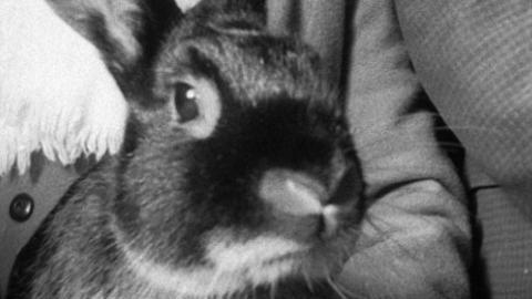 Kingsbridge Bird and Rabbit Show