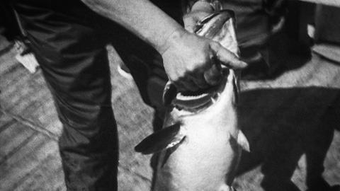 Line-caught Haddock