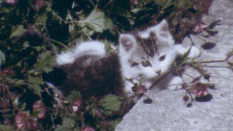Pwtan the Kitten