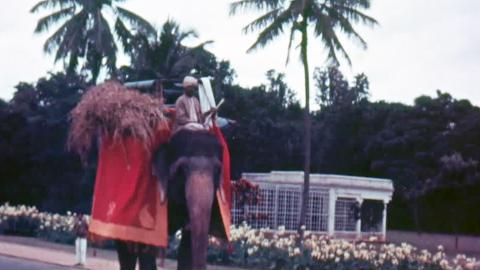 Mysore - Farming Scenes, Dussehra Festival and Mysore Zoo