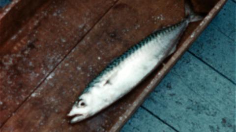 Fishy Tale