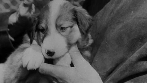 Dogs for Sale; Railroad Renaissance; The Highlands