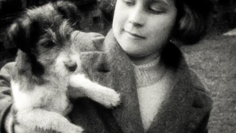 Parsons' Pets