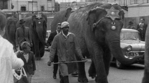 Elephants in Plymouth