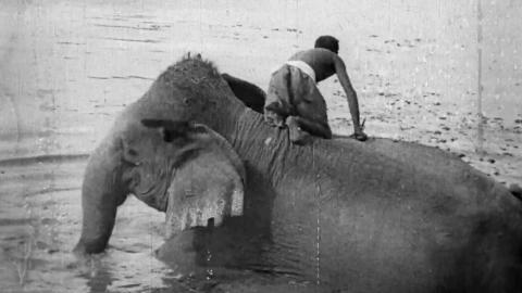 Indian Elephants and their Handlers