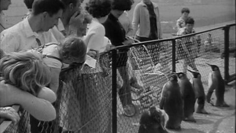 Monkey Mischief at Whipsnade