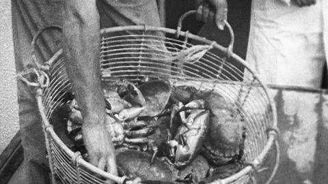 Porthleven Crab Processing Plant