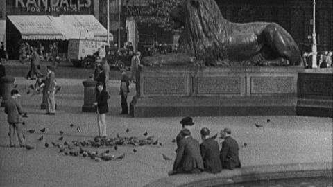 London Pigeon