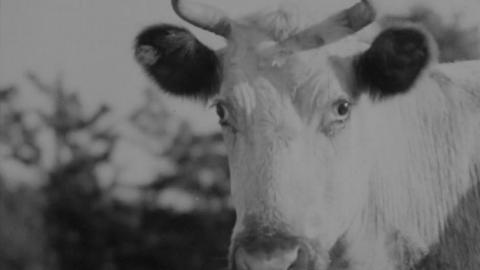 Somersetshire Dairy Farming