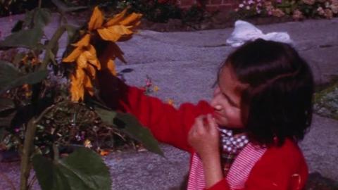 Autumn in Delamere