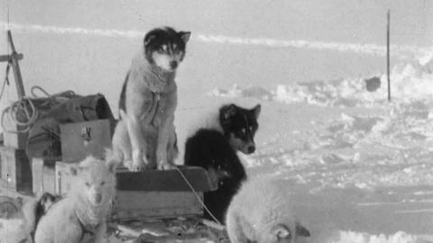 Greenland Rymill 1933