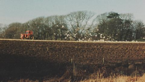 Landmarks and Seagulls