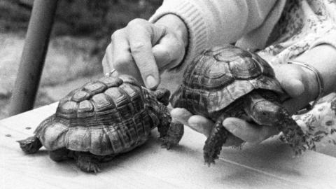 Friend of the Little Tortoises