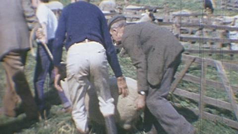 Hempton Sheep Fair