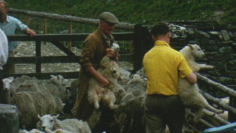 Glanhirin and Bodtalog Shearings – July 1962