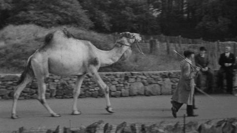 Chester Zoo 1952