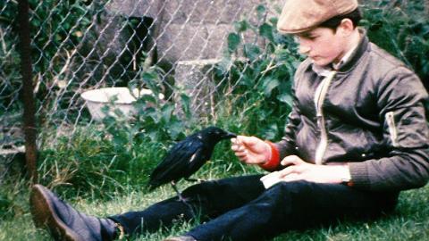 Pet Crow