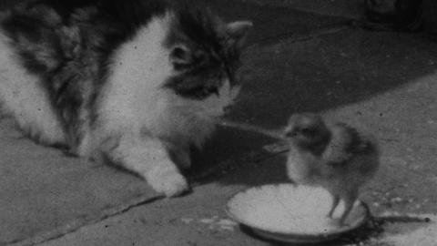 Parsonage Farm III – kids, cat, chick and children