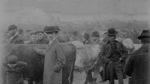 Cattle Market in Derry (1902)
