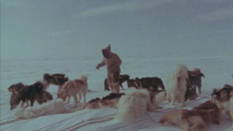 Jenny's Dog Team Journey