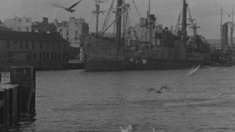 Gannets at Lerwick