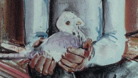 Pigeon Cree