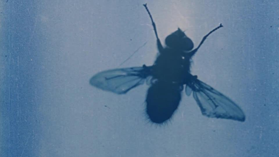 Watch The Fly Online Bfi Player